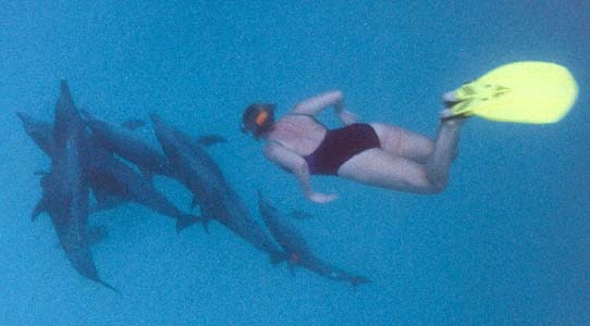 Jane Prowse swimming with dolphins